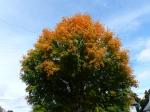fall-colours-1