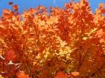 fall-colours-10