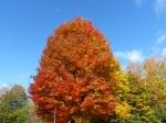 fall-colours-11