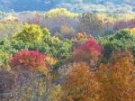fall-colours-13