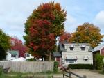 fall-colours-3