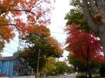 fall-colours-4