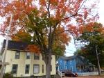 fall-colours-5