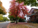 fall-colours-6