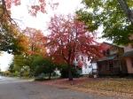 fall-colours-7