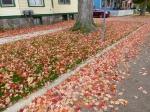 fall-colours-8