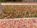 fall-colours-9
